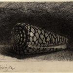 Rembrandt Etching of a shell from the Biblioteque Nationale de France
